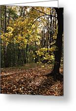 Forest In Fall Greeting Card