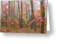 Forest In Late Autumn Greeting Card
