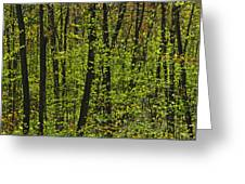 Forest In Spring Foliage, Six Mile Lake Greeting Card