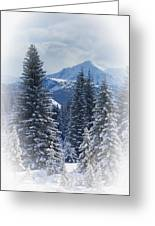 Forest In The Winter Greeting Card