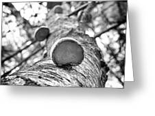 Forest Ladder Greeting Card