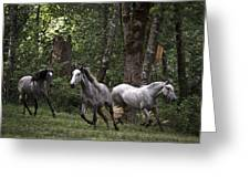 Forest Mares Greeting Card