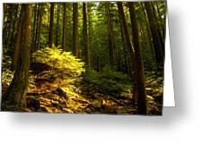 Forest Greeting Card by Matt  Trimble