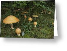 Forest Mushrooms Sprout Greeting Card