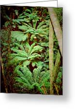 Forest Of Ferns Greeting Card