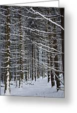 Forest Of Marburg In Winter Greeting Card