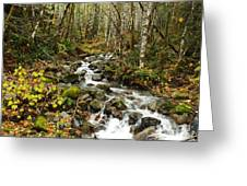 Forest Overflows Greeting Card