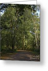 Forest Path 1 Greeting Card