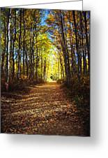 Forest Path In Autumn Greeting Card