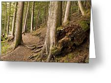 Forest Pathway, Whistler, British Greeting Card