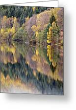 Forest Reflected In A Loch Greeting Card