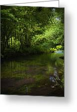 Forest River Greeting Card
