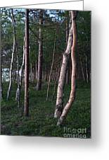 Forest, Shore Of Lake Superior Greeting Card
