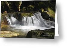 Forest Stream 2a Greeting Card