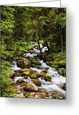 Forest Stream In Tatra Mountains Greeting Card
