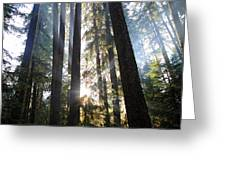 Forest Sun Rays In Olympic National Park Greeting Card