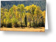 Forested Light Greeting Card