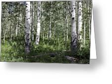 Forever Aspen Trees Greeting Card