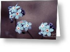 Forget Me Not 01 - S05dt01 Greeting Card