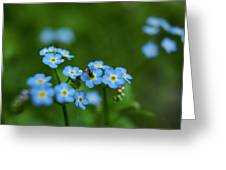 Forget-me-nots In Treman State Park, Ny Greeting Card