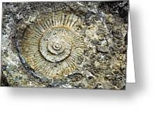 Fossil Geology Greeting Card