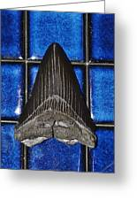 Fossil Megalodon Tooth Greeting Card