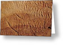 Fossilised Water Ripples In Sandstone Greeting Card