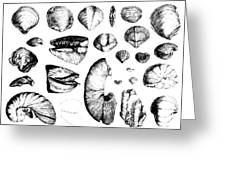 Fossilized Shells, 1844 Greeting Card