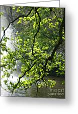 Fountain Behind Tree Branches Greeting Card