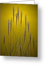 Fountain Grass In Yellow Greeting Card