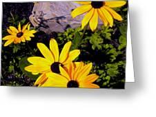 Four Black Eyes Greeting Card
