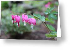 Four Bleeding Hearts Greeting Card