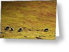 Four Sheep Greeting Card