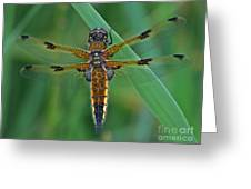 Four-spotted Chaser Dragonfly 5 Greeting Card