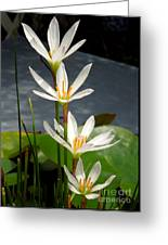 Four Tall Marsh Grass Blooms Greeting Card