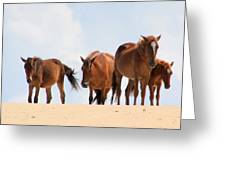 Four Wild Mustangs Greeting Card