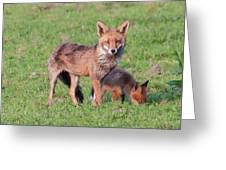 Fox And Baby Greeting Card