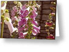 Fox Glove Greeting Card by Kelly Rader
