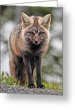 Fox Near Reflection Lake Greeting Card