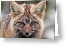 Fox Portrait Greeting Card