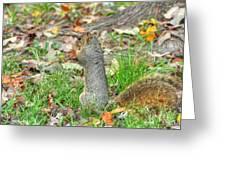 Fox Squirrel Eating Nut Greeting Card