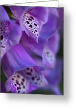 Foxglove Detail Greeting Card