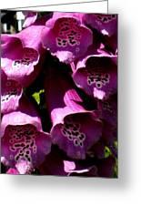Foxglove Macro Greeting Card