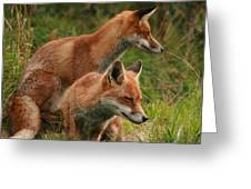 Foxy Pair Greeting Card by Jacqui Collett
