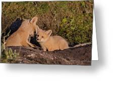 Foxy Talk Greeting Card