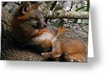 Foxy's Naptime Greeting Card