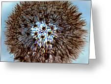 Fractal Seed Greeting Card