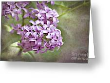 Fragrant Purple Lilac Greeting Card by Cheryl Davis