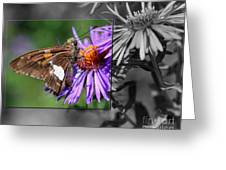 Framed Butterfly Greeting Card