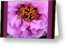 Framed In Purple - Abstract Floral Greeting Card